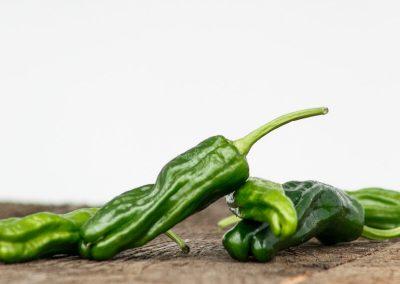 vandenbosch-seeds-pepper